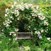 садовый участок 4 сотки фото оформление