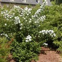 садовый участок 4 сотки оформление