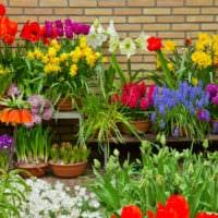 садовый участок 4 сотки сад в горшках
