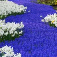 садовый участок 4 сотки тонкости ландшафтного дизайна варианты декор
