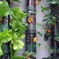 садовый участок 4 сотки тонкости ландшафтного дизайна вертикальный сад