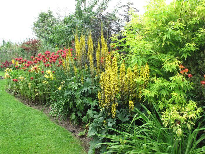 Цветущие многолетние растения в своем саду