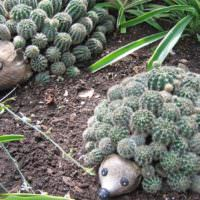 Ежики из кактусов для украшения сада