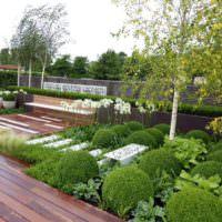 Шаровидные растения в садовом ландшафте