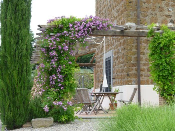 Пергола с цветущим клематисом в дизайне небольшого сада