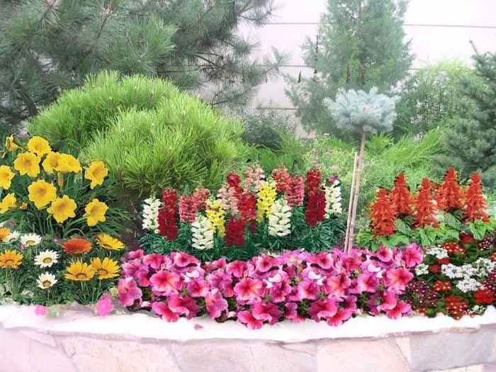 Цветник своими руками из однолетних растений