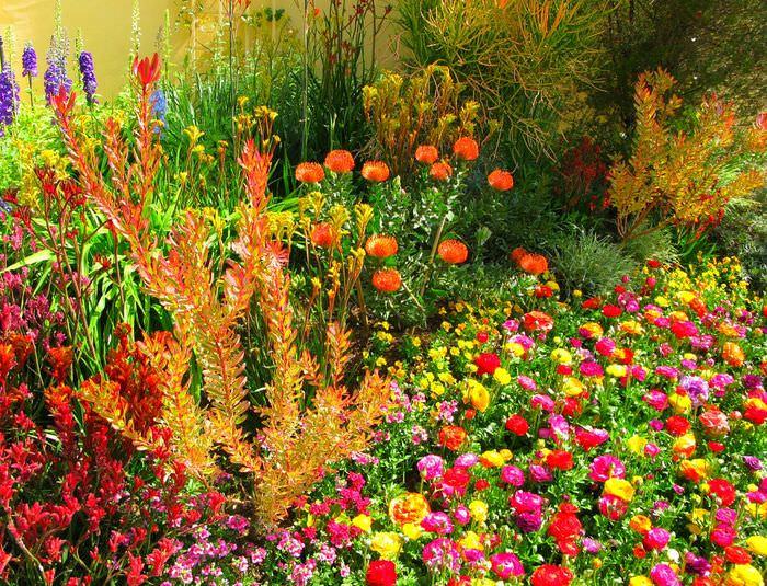 Ярко цветущий миксбордер на загородном участке