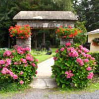 Розовые гортензии по бокам садовой дорожки