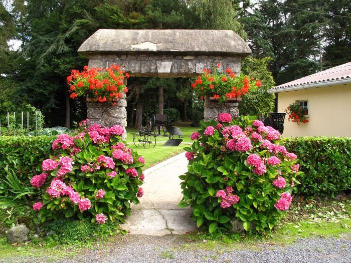 Фото цветы у дома