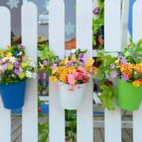Яркие цветочные горшки на деревянном заборе