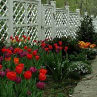 Клумба с тюльпанами вдоль деревянного забора