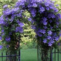 Металлическая арка с цветущим клематисом