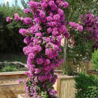 Вертикальное озеленение маленького сада