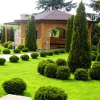 Шаровидные туи в ландшафте маленького сада
