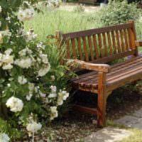 Плетистые розы около садовой скамейки