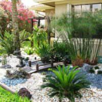 Уголок тропического сада на дачном участке