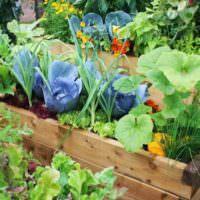 Деревянные ящики для цветов вместо садовых клумб