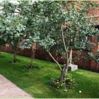 Грушевые деревья вдоль садовой дорожки