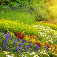 Полевые цветы в ландшафтном дизайне