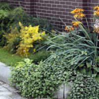 Многолетние растения перед кирпичным забором