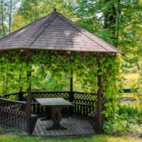 Вьющиеся растения в оформлении садовой беседки