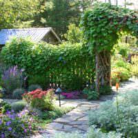 Ипомея в вертикальном озеленении сада