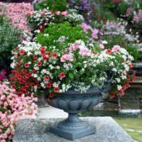 Красивые цветы в бетонном вазоне