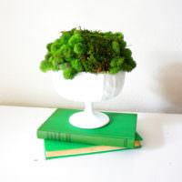 Живой мох в белой вазе на тумбочке