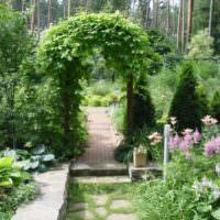 Арка с вьющимися растениями в ландшафте частного сада