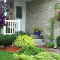 Хвойные растения в оформлении парадной зоны сада