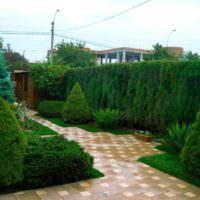 Хвойный сад на приусадебном участке