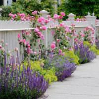 Белый забор и сиреневый цветы на дачном участке