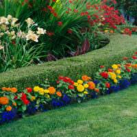 Бордюр из стриженного кустарника и живые цветы
