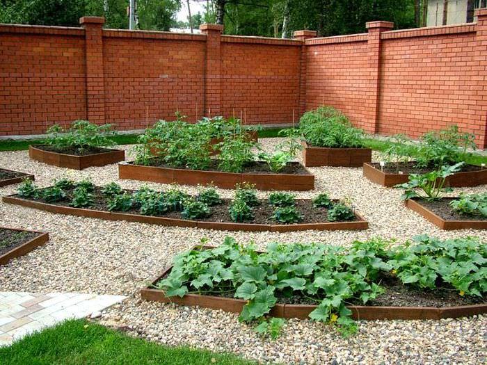 Огородная зона с красивыми грядками на дачном участке
