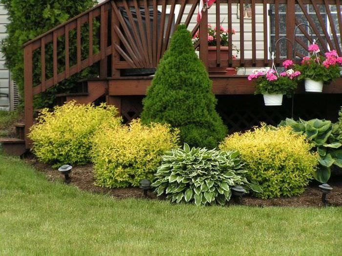 Красивая подборка кустарников для оформления крыльца садового домика