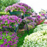 Вертикальное озеленение сада с помощью вазонов