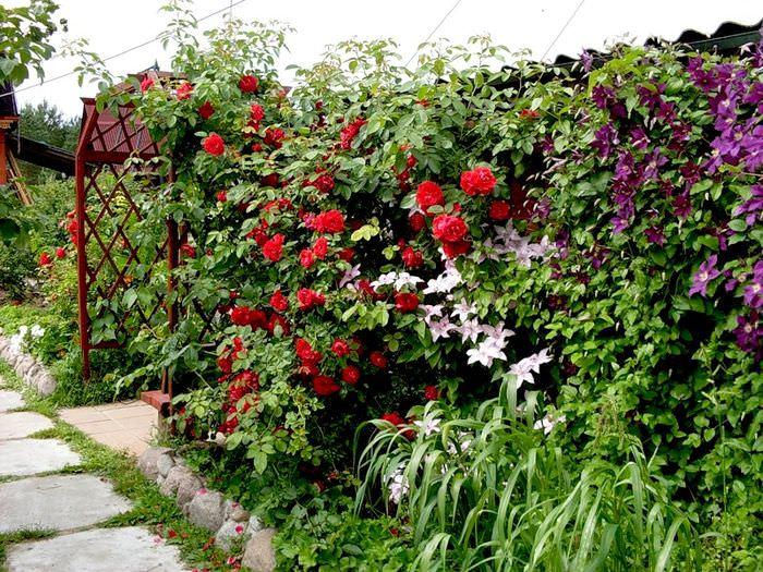 Декорирование сада вьющимися растениями