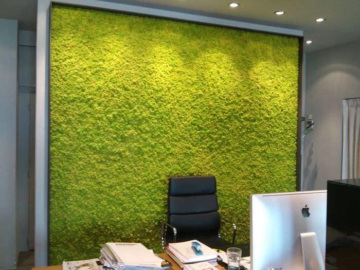 Зеленый мох на стене рабочего кабинета