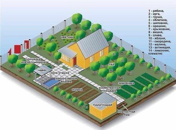 План-схема озеленения приусадебного участка