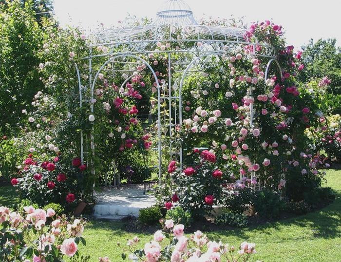 металлическая открытая беседка с цветущими розами