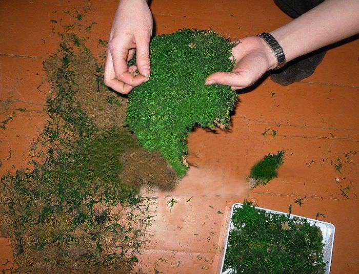 Подготовка натурального мха для изготовления предметов декора