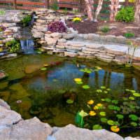 Садовый пруд с кувшинками на поверхности воды