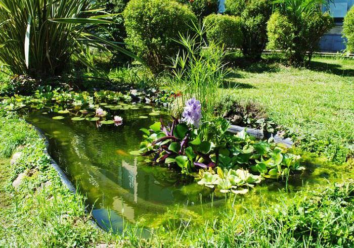 Небольшой садовый прудик с водными растениями