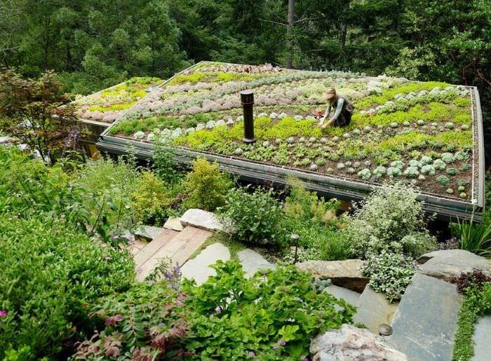 Использование плоской крыши дома в качестве сада и огорода