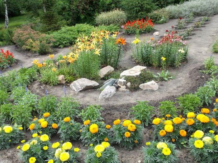 Клумба с бархатцами и лилиями на садовом участке своими руками