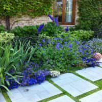 Голубые цветы на клумбе дачного участка