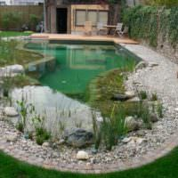Пруд с водными растениями на даче