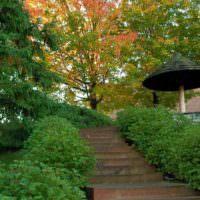 Озеленение склона загородного участка