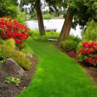 Узкая полоса зеленого газона на склоне садового участка