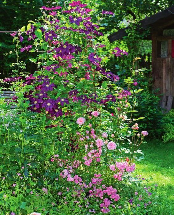 Создание перспективы объема в маленьком саде с помощью вертикального озеленения